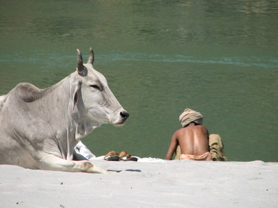 Ganga at Rishikesh