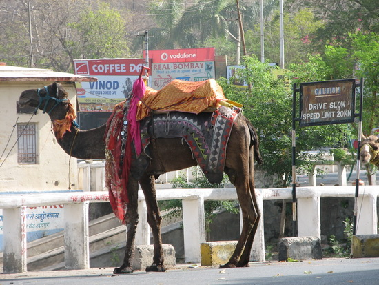 Transport in Udaipur