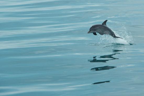030-wildquest-dolphins