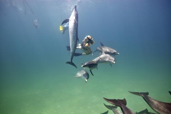 085-wildquest-dolphins