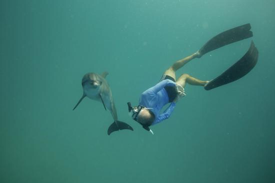 086-wildquest-dolphins