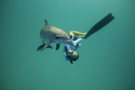 087-wildquest-dolphins