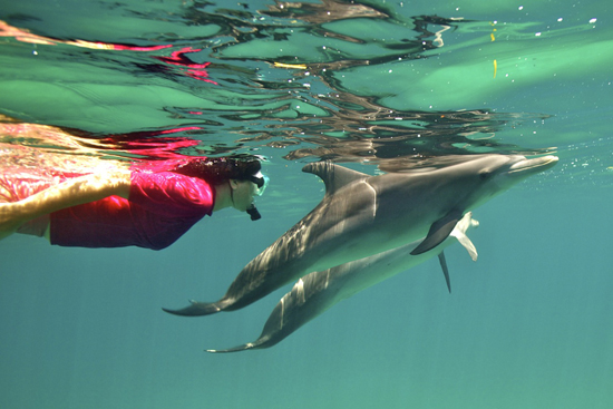 Wild Dolphin Encounters: Lessons in the Art of Podding