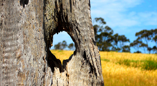 hole in a tree by Maneesha