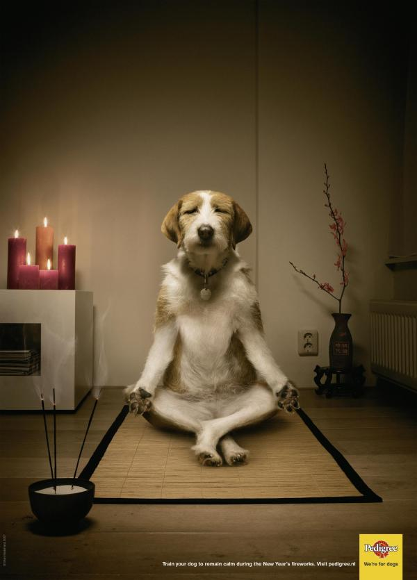 http://www.oshonews.com/wp-content/uploads/2011/08/dog-food-meditating-dog-small-274571.jpg