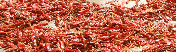 Hot Chillies 2