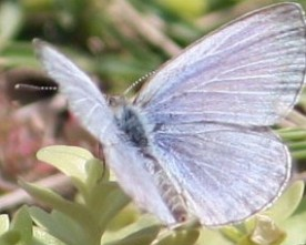 The Butterflies of Fukushima