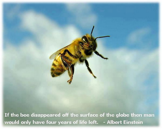Bee Quotes: Einstein On Bees