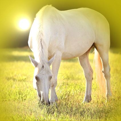 White Horse Standing Still