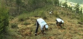 Record Tree Planting in Bhutan