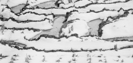 Rice Fields in Winter