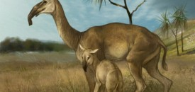The Pleistocene Period, Baby it's cold outside!