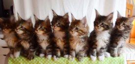 Seven Cats