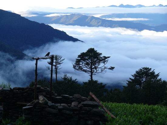 Trekking at dawn