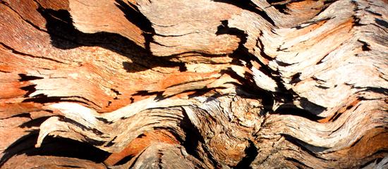 brown grey bark
