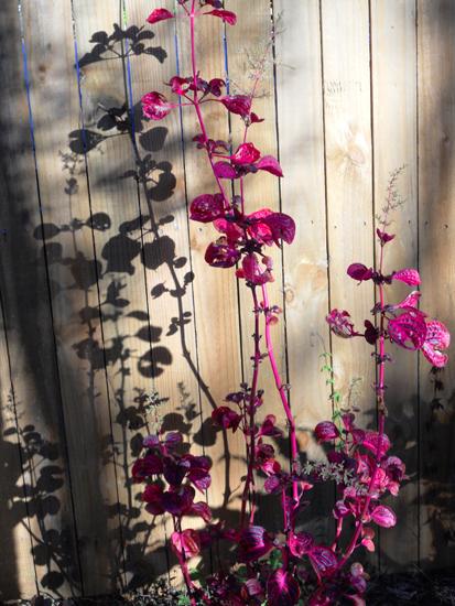 120-flower shadow