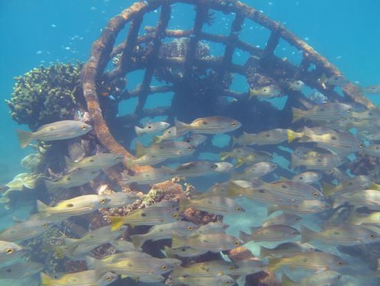 160-Bio-Rock Structure_ Bumbung with School of blackspotted Snapper