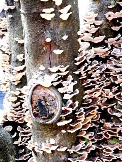 165-funghi-on-wood