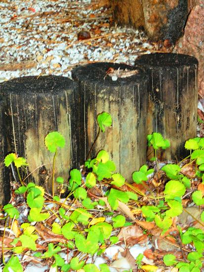 180-woodensteps