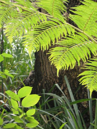 190-various-- foliage