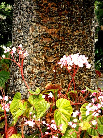 250-trunk-flowers