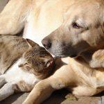 Gato and Mowgli