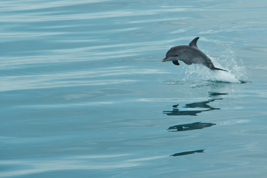 030-wildquest-dolphins