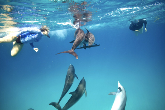 060-wildquest-dolphins