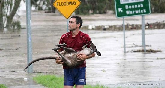 Queensland Floods - The Big Wet [photo by Nick de Villiers, Ipswich]