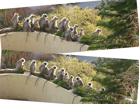 Monkeys in the sun