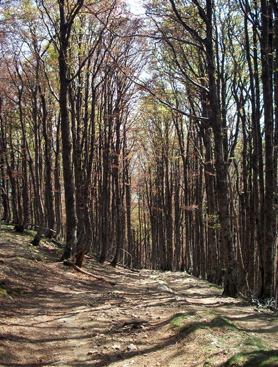Descent to Roncesvalles through the woods