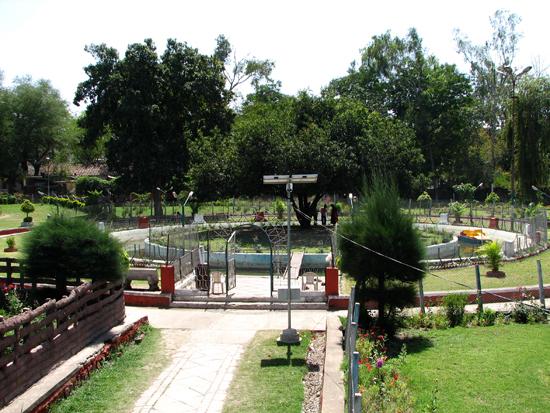 4. Maulshree tree surrounded by moat