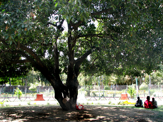 5. Meditators in the shade