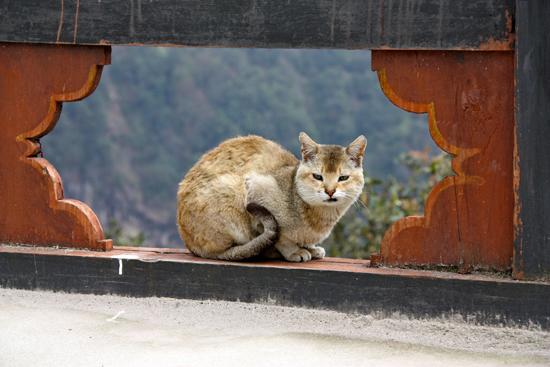 010-bhutan