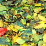 autumn by Rashid