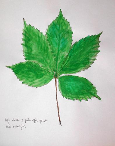 leaf which I find effulgent and beautiful