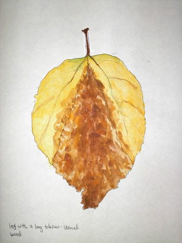 leaf with a tobacco-stained beard