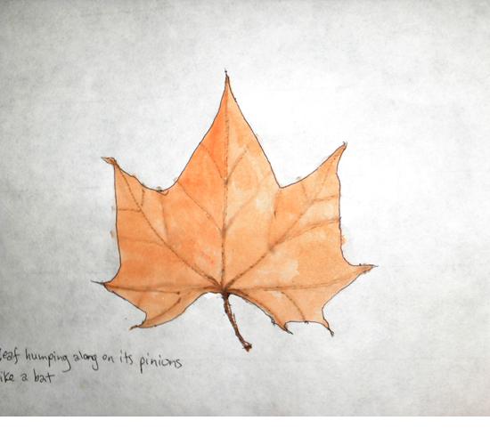 leaf humping along on its pinions like a bat