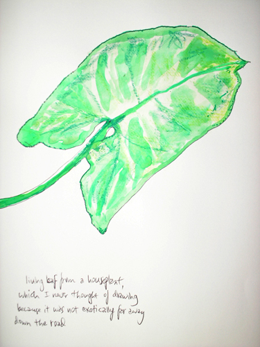 living leaf from a houseplant which I never thought of drawing because it was not exotically far away down the road