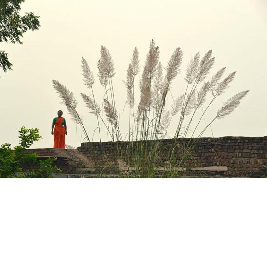 010 maya grass and lady