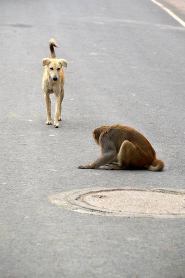 097 maya dog moonkey