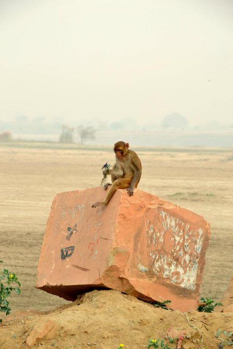 098 maya monkey on rock