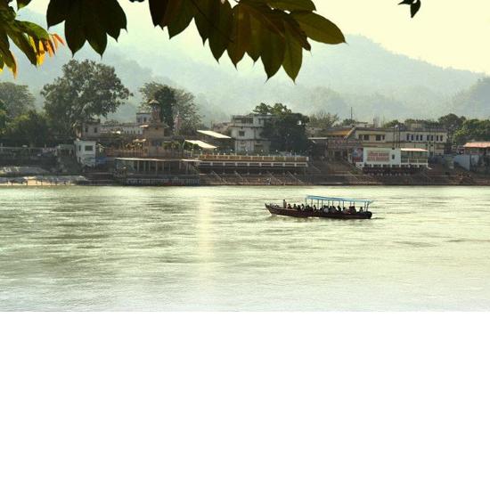 130 maya river boat tree