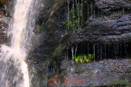 waterfall by Maneesha