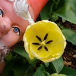 Sadhvi's Swiss Gnome