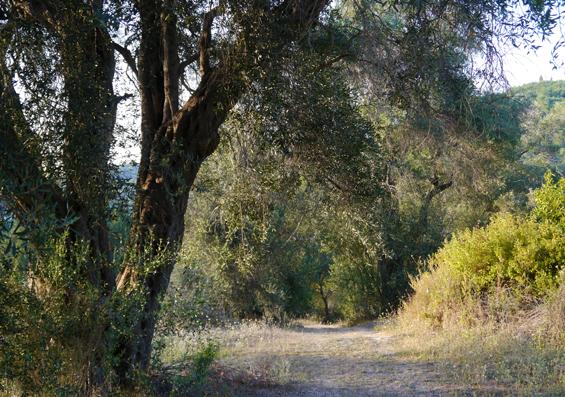 050 Sumano Corfu