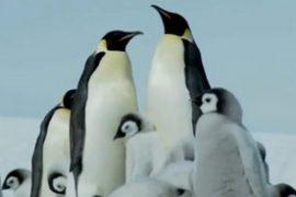 Penguins Feat.