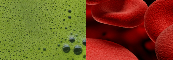 blood and green juice