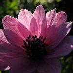 Flower Shivananda