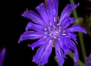Flower Feat.